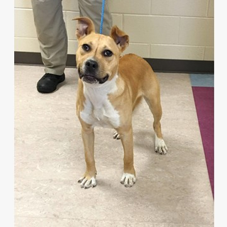 171100 CLIFF labeled pit mix Clayton County AC