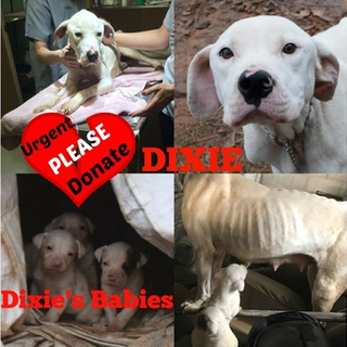 DIXIE and her 3 baby puppies MCAC Forsyth, GA