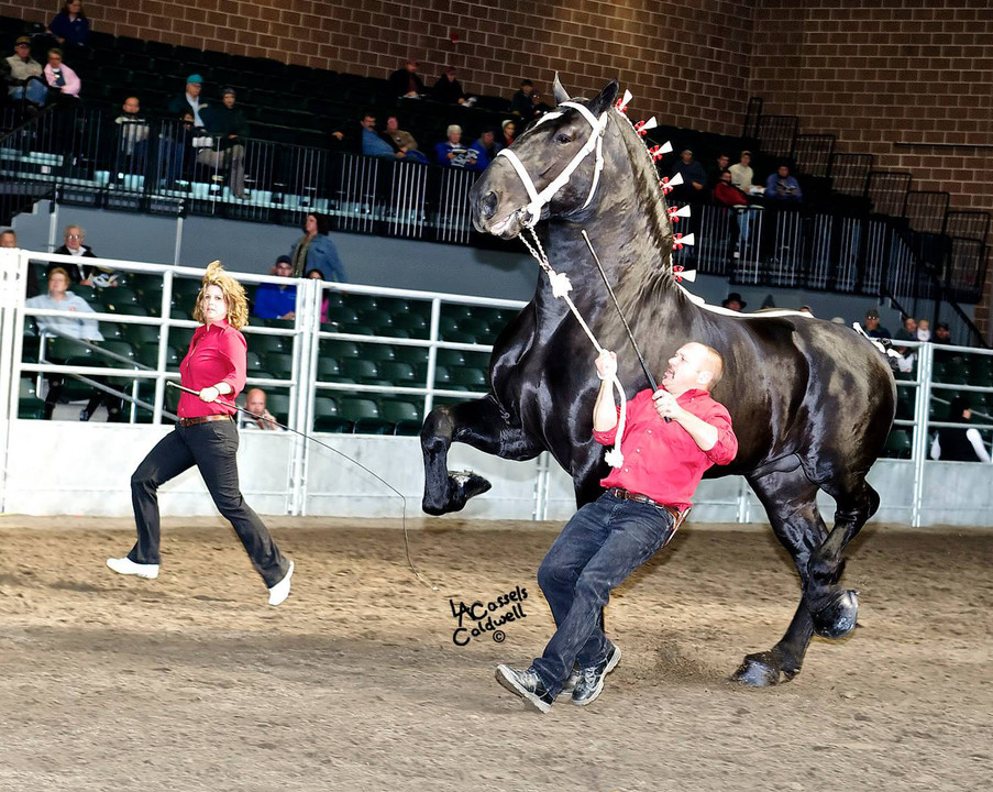 Percheron Horse Association Of America Posted A Story