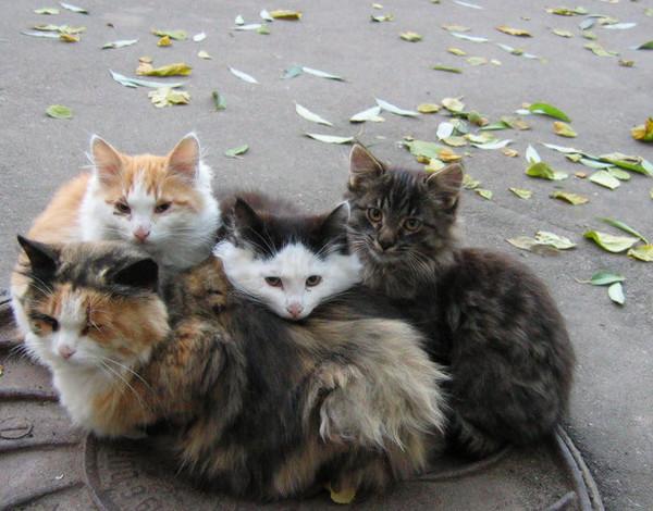 котенок бездомны фото