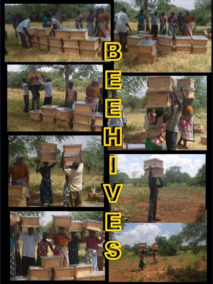 BEE HIVES SAVE Elephants LIVES!