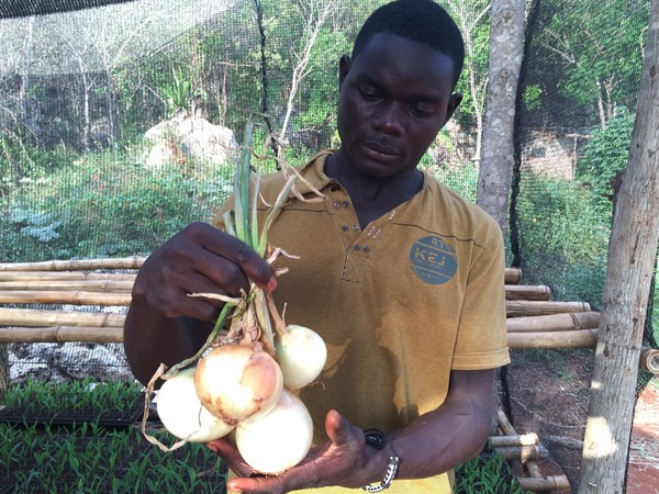 Student Inspecting Onions He Grew In S. Manchester
